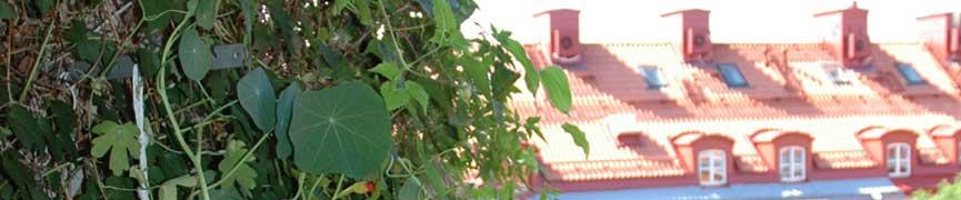 Slumpmässig bild från föreningen... Ladda om sidan för att se fler bilder!